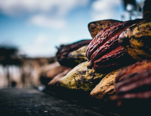 Looking for the best chocolate in the world?Venezuela has it!